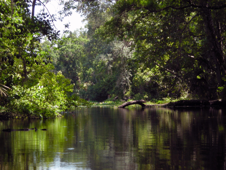 Wekiva River My Florida Kayaking Adventures - Florida rivers