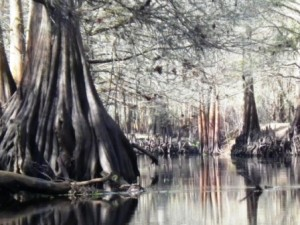 The Withlacoochee Dressed in Browns and Grays