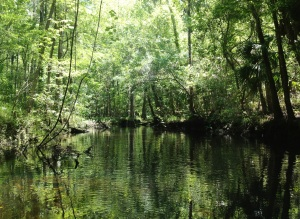 The Natural Beauty of the Waccasassa River
