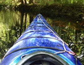 Stuck on a Log--Waccasassa River