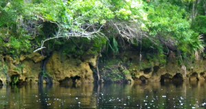 Limestone Banks Etched by Moving Waters
