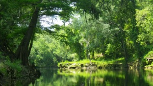 Lush Green on the Withlacoochee River North