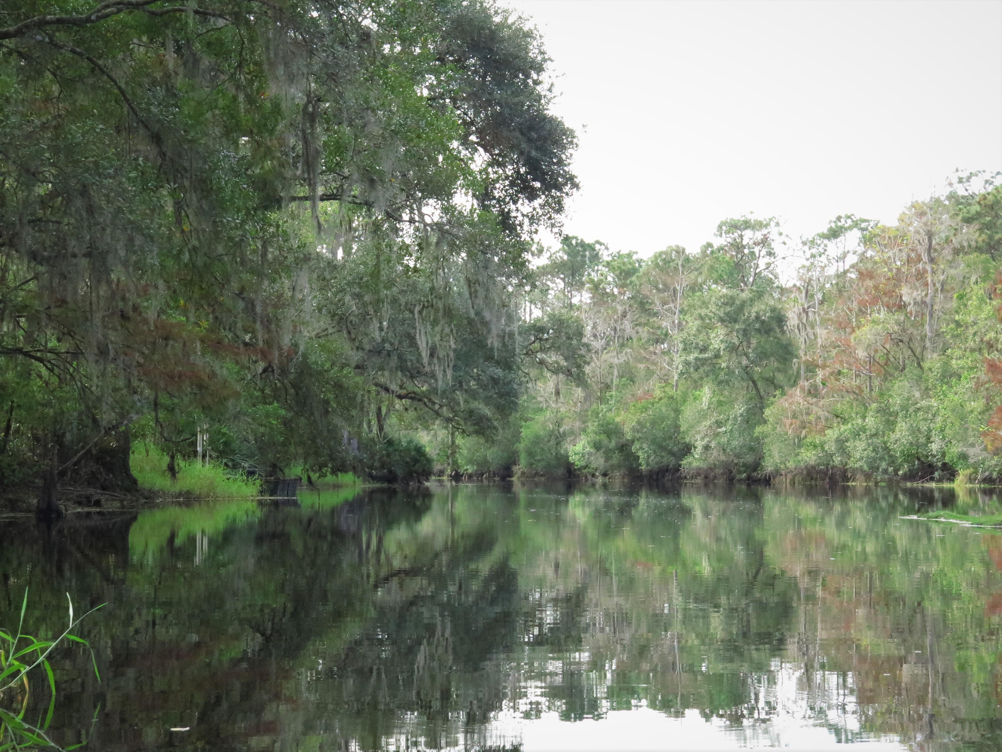 Florida Rivers My Florida Kayaking Adventures - Florida rivers